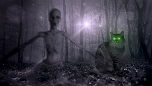 Horror trip alcoholic delirium: ghost cats and grimaces in the mirror. A victim tells his story.